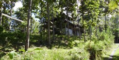 FREEHOLD LAND IN TABANAN