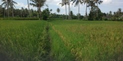 20 ARE OF LAND NEAR PEJENG KAWAN – BE AHEAD OF THE GAME!!!