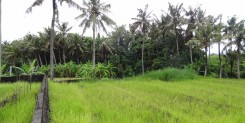 Leasehold Land in bali
