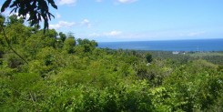 LAND FOR SALE IN LOVINA IDR 45M/ARE