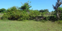 FREEHOLD LAND IN KUTUH IDR 375M/ARE