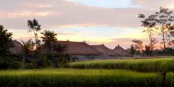 Luxury House in Ubud Gianyar - Green View