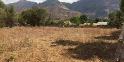A GREAT FREEHOLD LAND IN PEMUTERAN-IDR 100M/ARE
