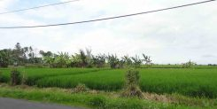Buy Land in Cemagi Bali | The Luxury property