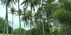 Land Business Investment in Bali   The Amazing Location