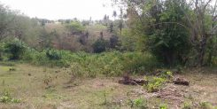 AFFORDABLE LAND IN TABANAN IDR 40M/ARE