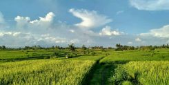 Buy Land in Nyanyi Bali - Near Beach