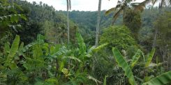 GORGEOUS FREEHOLD LAND BY THE TWO RIVERS FOR SALE IN UBUD