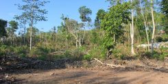 30 ARE FREEHOLD LAND IN PECATU - IDR 275M/ARE