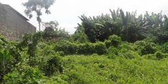 PREMIUM LAND IN CANGGU ONLY 500M FROM THE BEACH IDR 20M/ARE/YEAR
